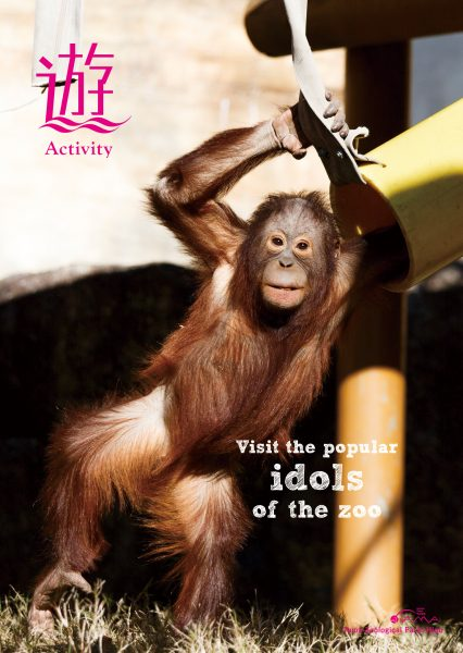 Visit the popular idols of the zoo