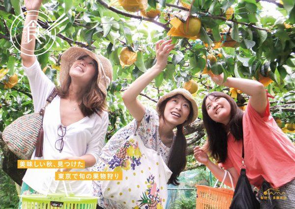 美味しい秋、見つけた 東京で旬の果物狩り