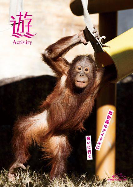動物園のアイドルに会いに行く
