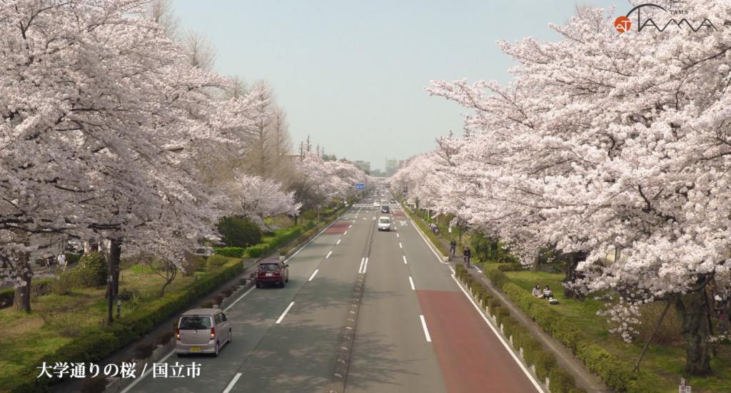 「多摩の春の花」動画をアップしました!