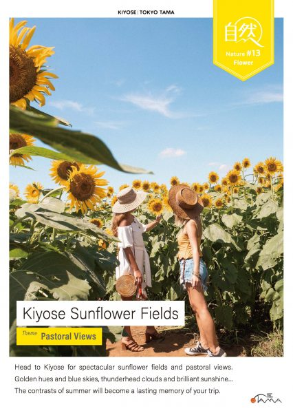 Kiyose Sunflower Fields